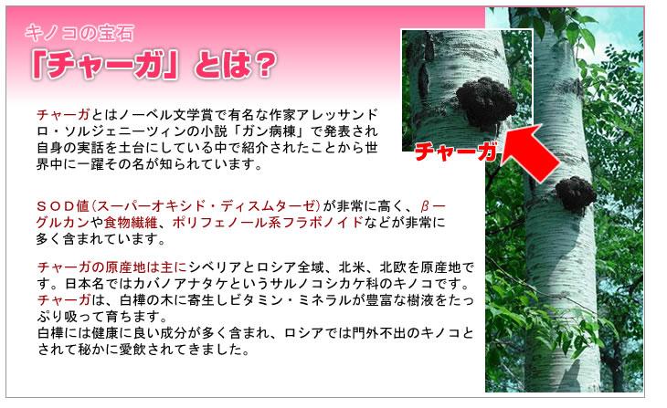 チャーガについて和名カバノアナタケ sod食品 sod酵素 カバノアナタケ サプリメント スーパーオキシド
